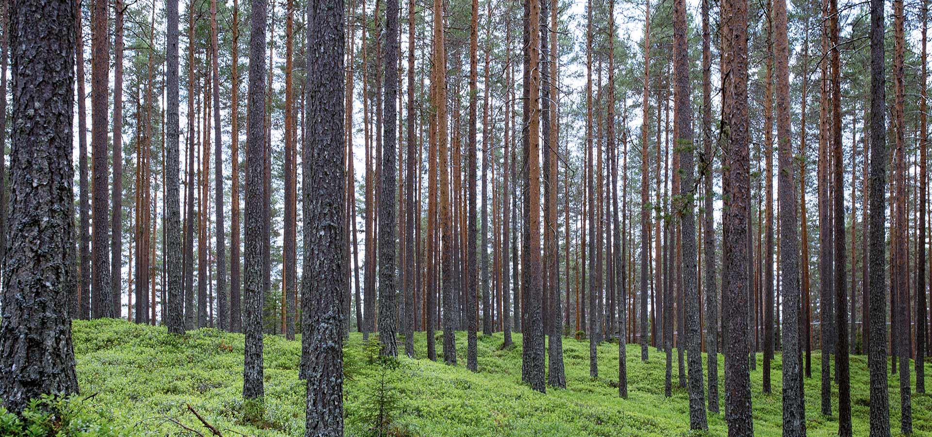 optimization-wood-resources-17