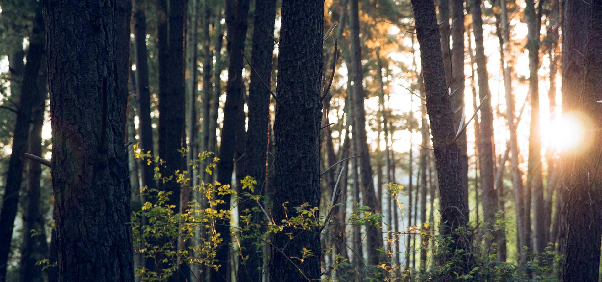 optimization-wood-resources-23