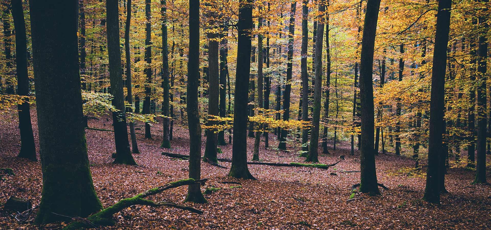 optimization-wood-resources-4